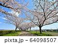 おの桜づつみ回廊 64098507