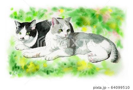 水彩で描いた2匹の猫 64099510