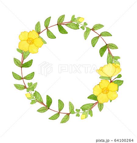 手描き水彩|キンシバイのリース 春のお花 イラスト 64100264
