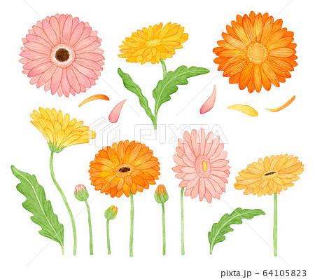 手描き水彩|ガーベラ 春と秋のお花 clipart 水彩イラストセット 64105823