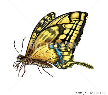나비의 세밀화 64108168