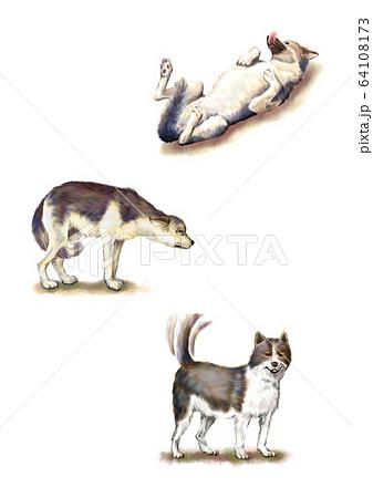動物 本 犬 64108173