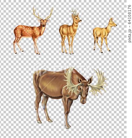 鹿的種類 64108176