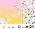 桜 花 背景 64119425