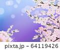 桜 花 背景 64119426