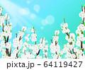 桜 花 背景 64119427