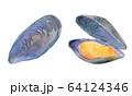 水彩イラスト 魚介 貝 海鮮 ムール貝 64124346