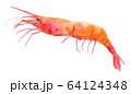 水彩イラスト 魚介 甘エビ 海鮮 64124348