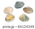 水彩イラスト 魚介 貝 海鮮 あさり 64124349