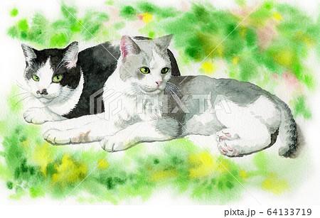 水彩で描いた2匹の猫 64133719