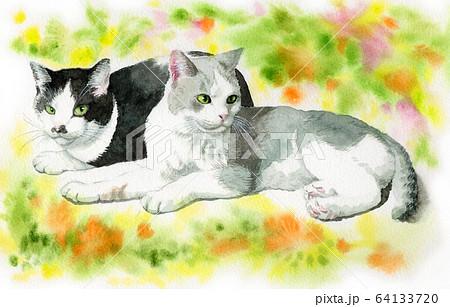 水彩で描いた2匹の猫 64133720