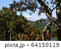 遠方の富士山 64150119