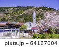 (静岡県)桜咲いた、酪農王国オラッチェ 64167004