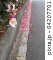 ピンクの椿と花弁 64207701
