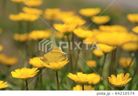 昆虫 植物 春 64210574