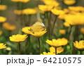 昆虫 植物 春 64210575