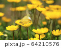 昆虫 植物 春 64210576