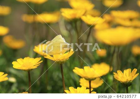 昆虫 植物 春 64210577
