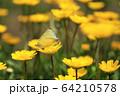 昆虫 植物 春 64210578