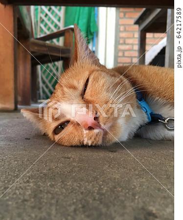 オープンカフェで横たわる猫の顔アップ 64217589