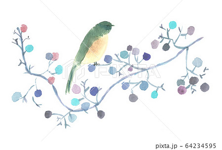 水彩で描いた鳥と木の実 64234595