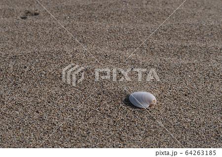 砂浜の貝 64263185
