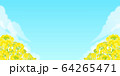 背景素材_菜の花 64265471
