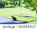 猫 64265617