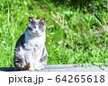 猫 64265618