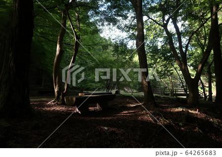 森の中 64265683