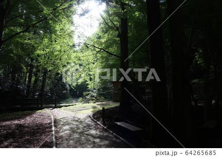 森の中 64265685