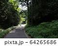 森の中の道 64265686