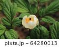 植物 花 春の花 64280013