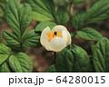 植物 花 春の花 64280015