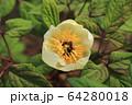 植物 花 春の花 64280018