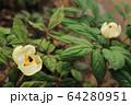 植物 花 春の花 64280951