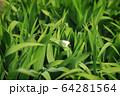 動物 昆虫 蝶 64281564
