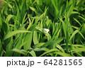 動物 昆虫 蝶 64281565