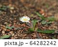 植物 花 春 64282242