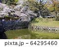 桜咲く彦根城 64295460