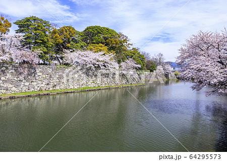 桜咲く彦根城 64295573