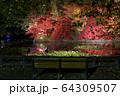 秋の公園 64309507