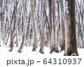 《新潟県》積雪の美人林 64310937