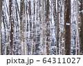 《新潟県》積雪の美人林 64311027