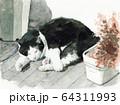 水彩で描いた昼寝する白黒の猫 64311993