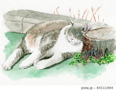 水彩で描いた昼寝する白とグレーの猫 64311994