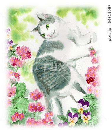 水彩で描いたサクラソウの花と猫 64311997