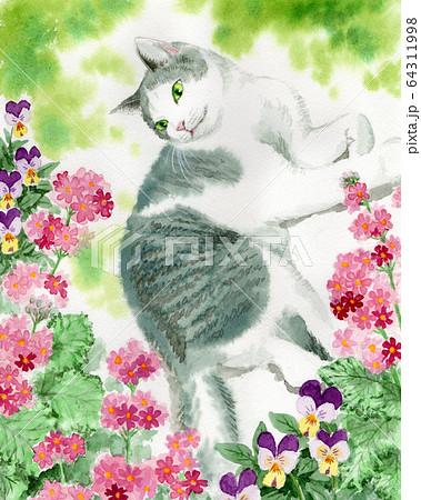 水彩で描いたサクラソウの花と猫 64311998