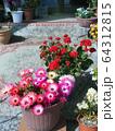 マツバギクの鉢植え 64312815