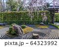 妙心寺 退蔵院 桜 64323992